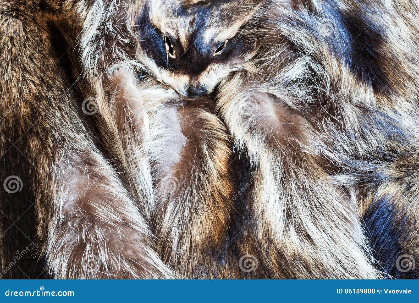 Few raccoon pelts with head