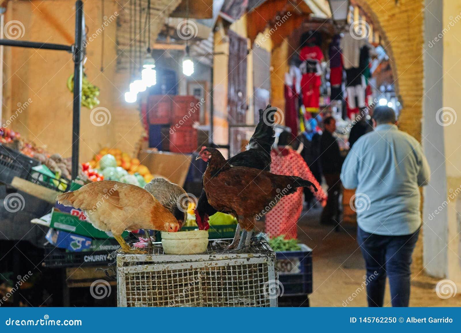 Fez, Marokko - December 07, 2018: kippen die in het midden van een straat in medina van Fez eten