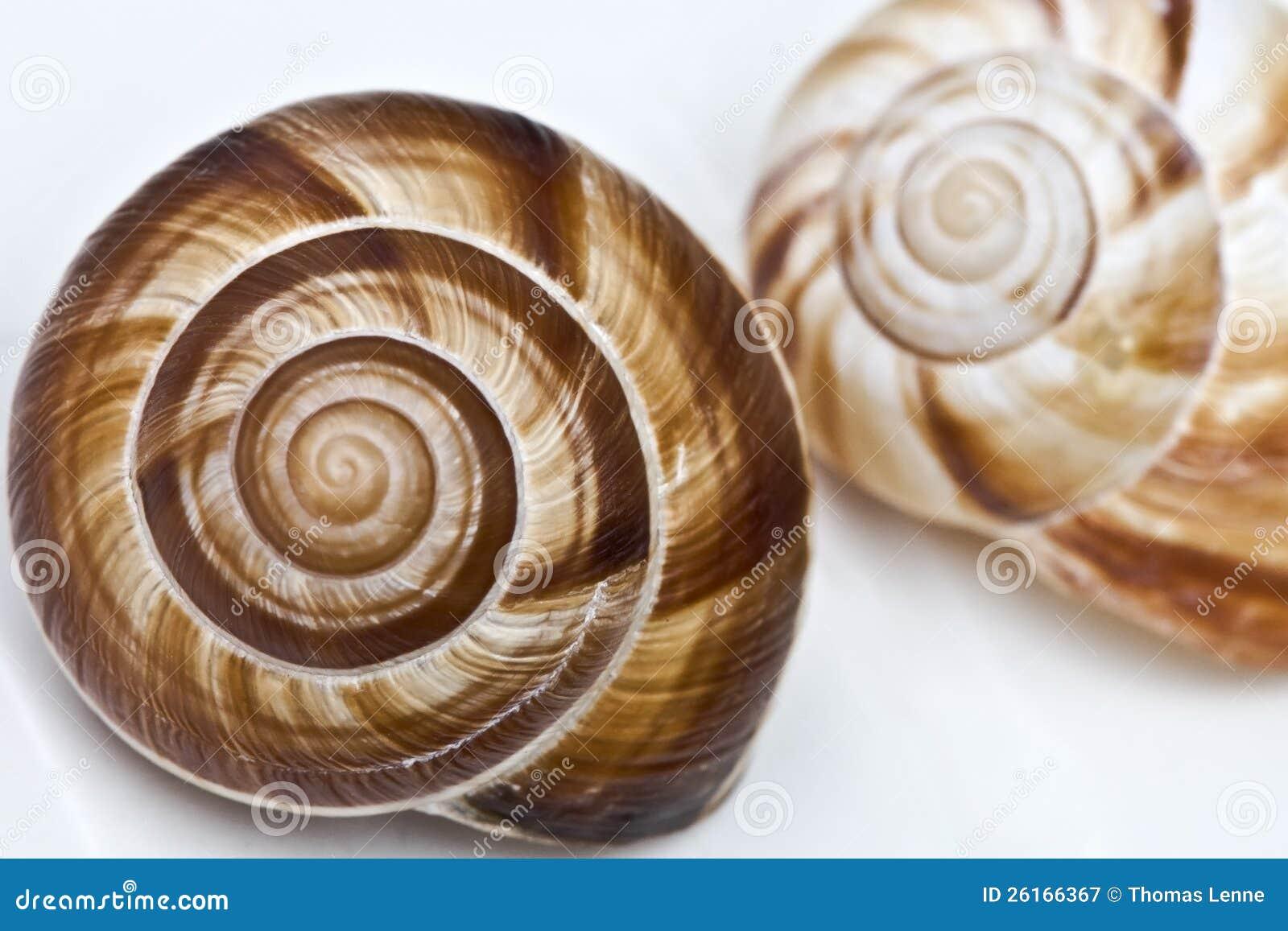 Fibonacci s spiral