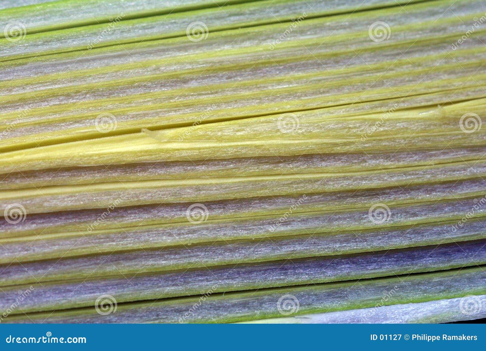 Fibra de planta