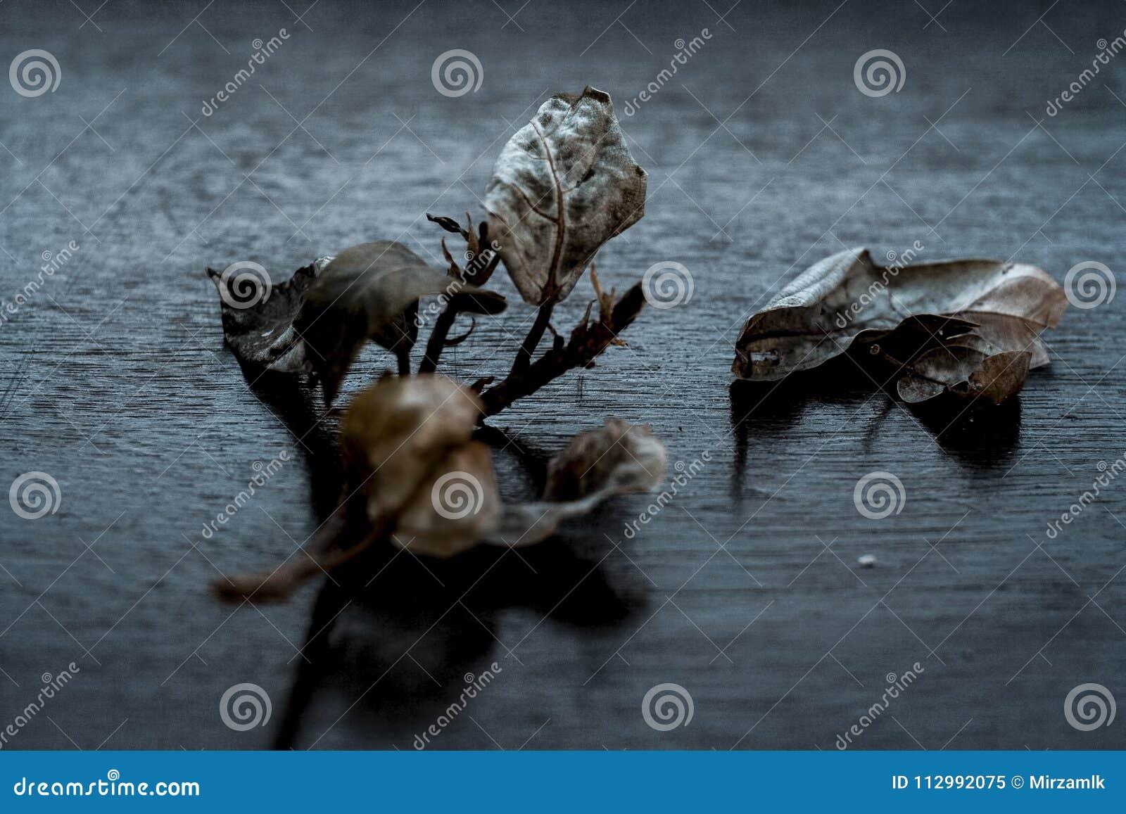 Fico indiano del mazzo su una superficie di legno