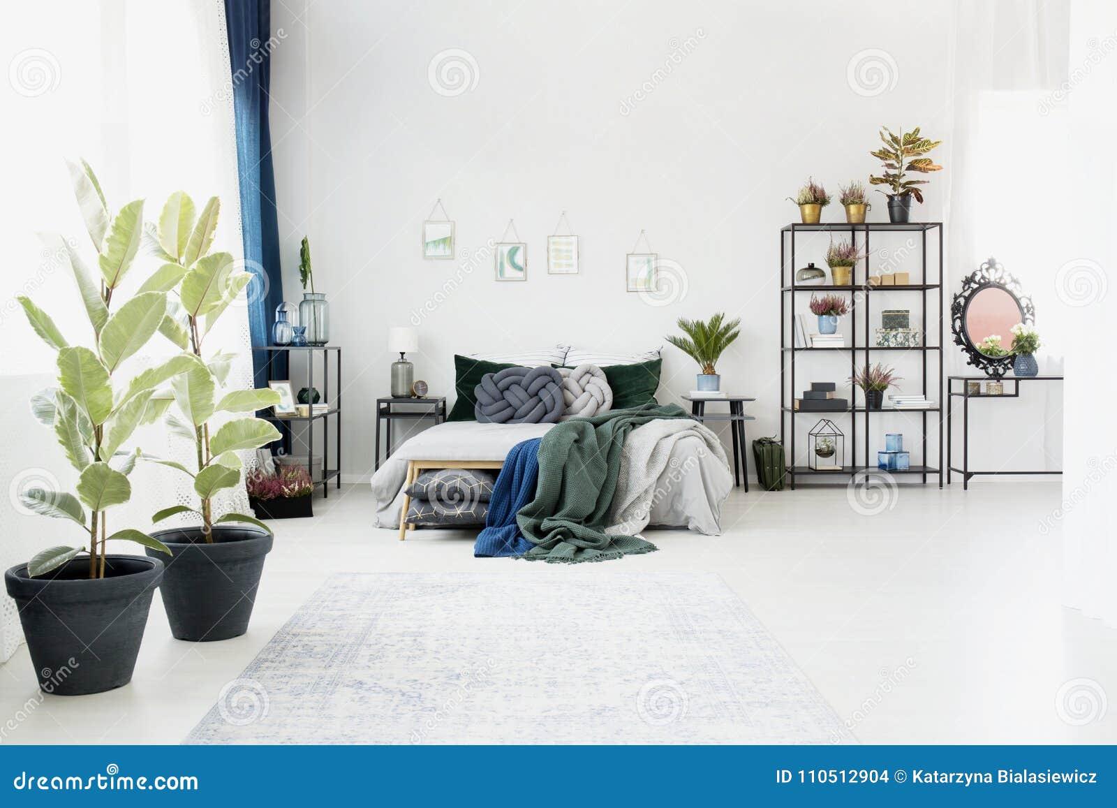 Ficus Nell Interno Spazioso Della Camera Da Letto Fotografia Stock