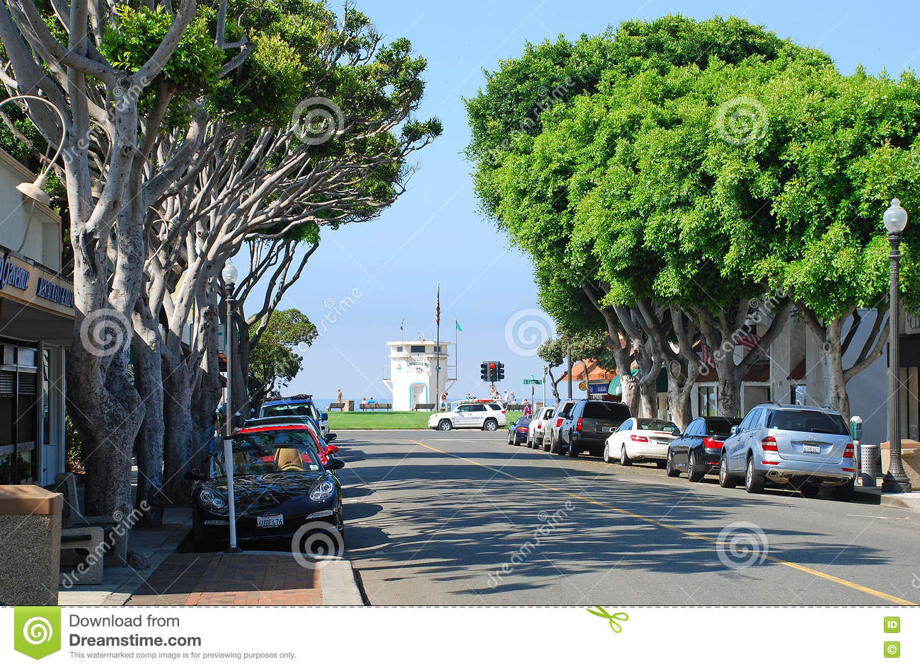 editorial stock photo - Ficus Trees