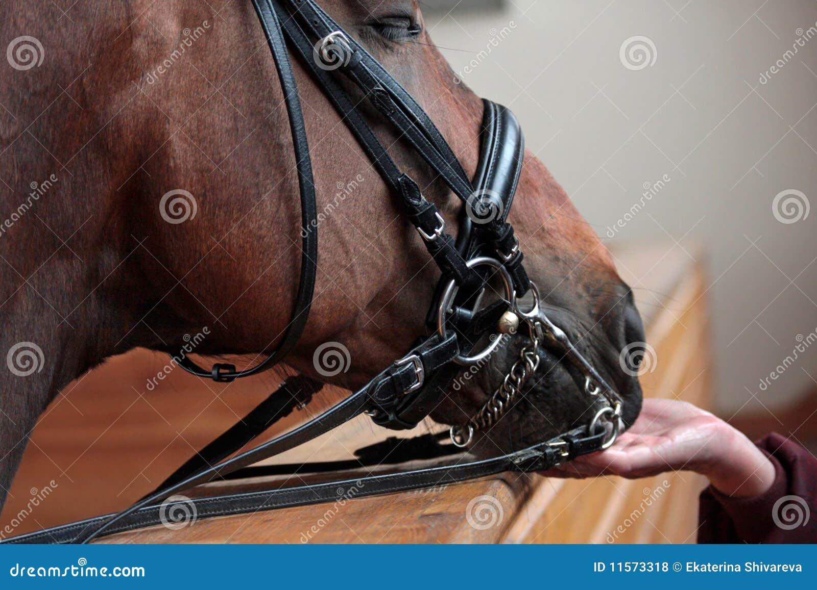 Fiducia del `s del cavallo
