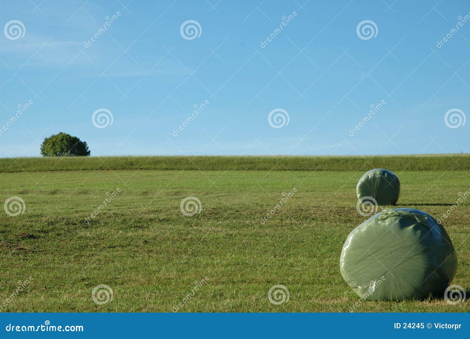Field зеленый цвет