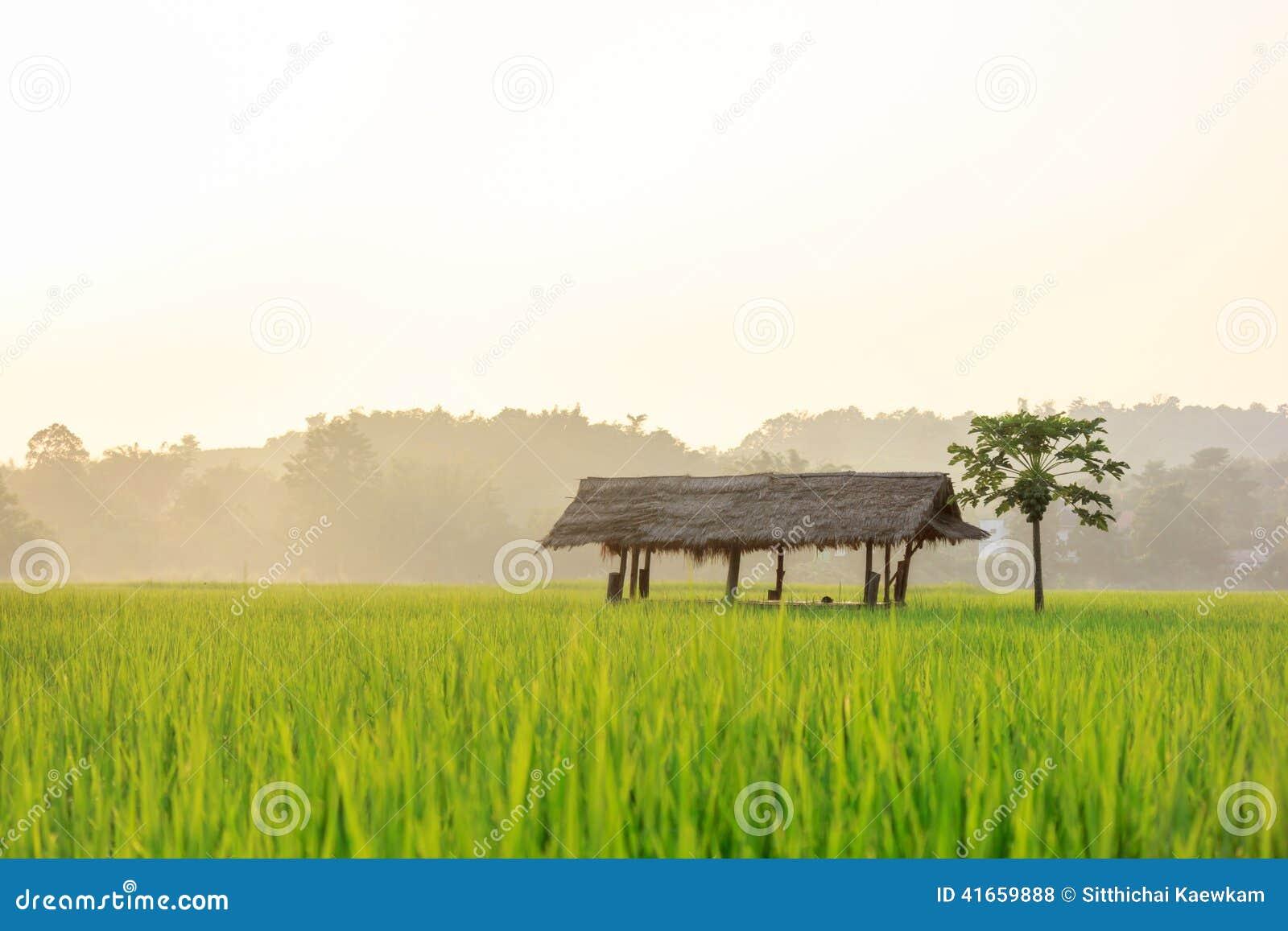 Field рис