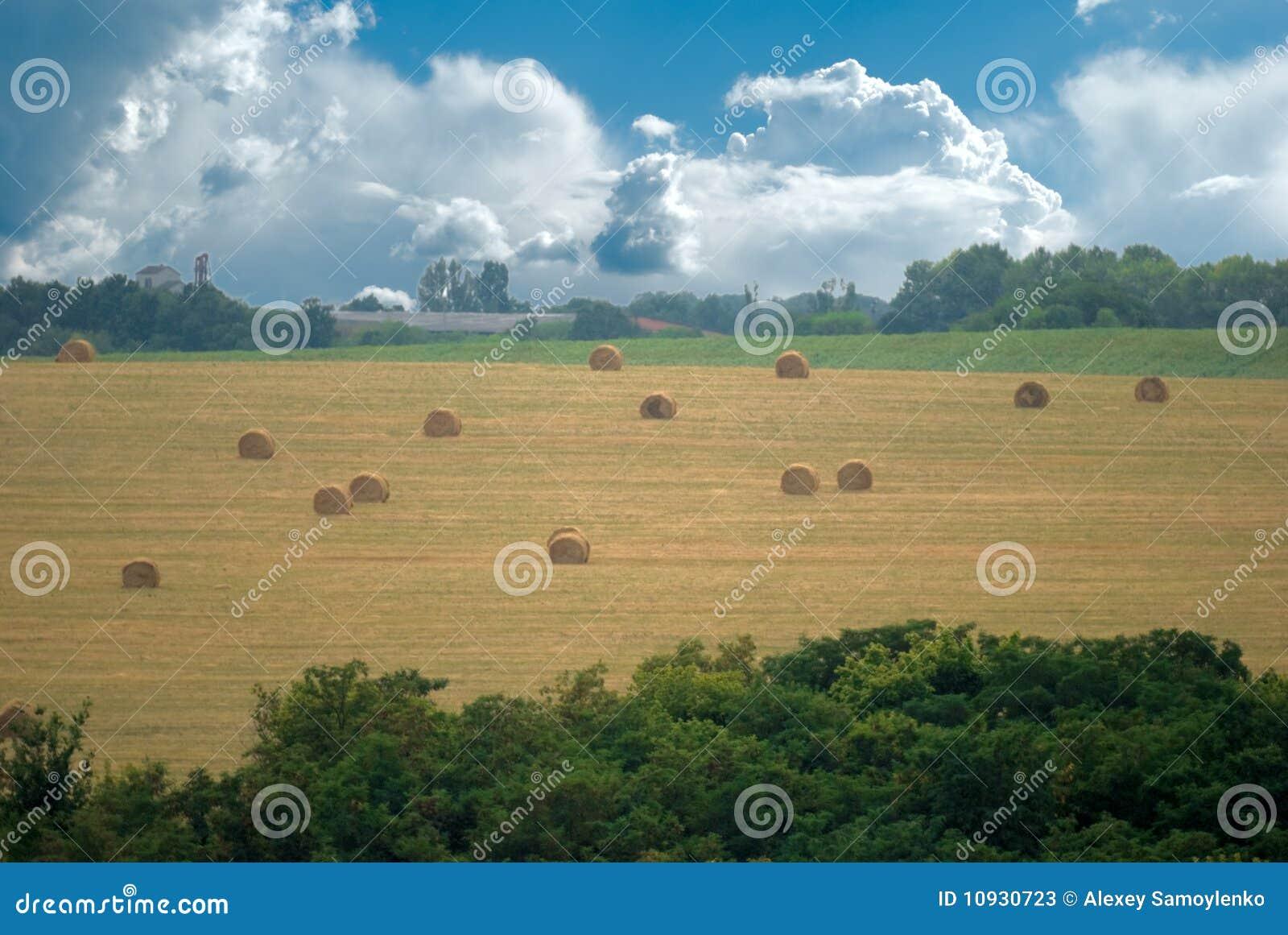 Field снопы