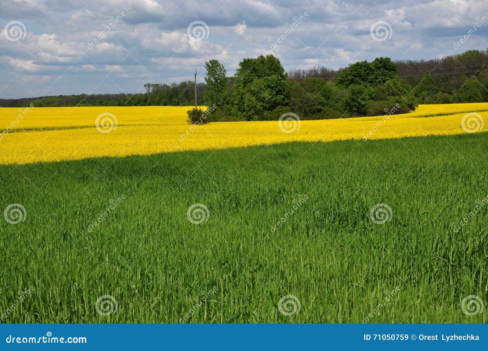 与强奸和麦子field_2的春天风景
