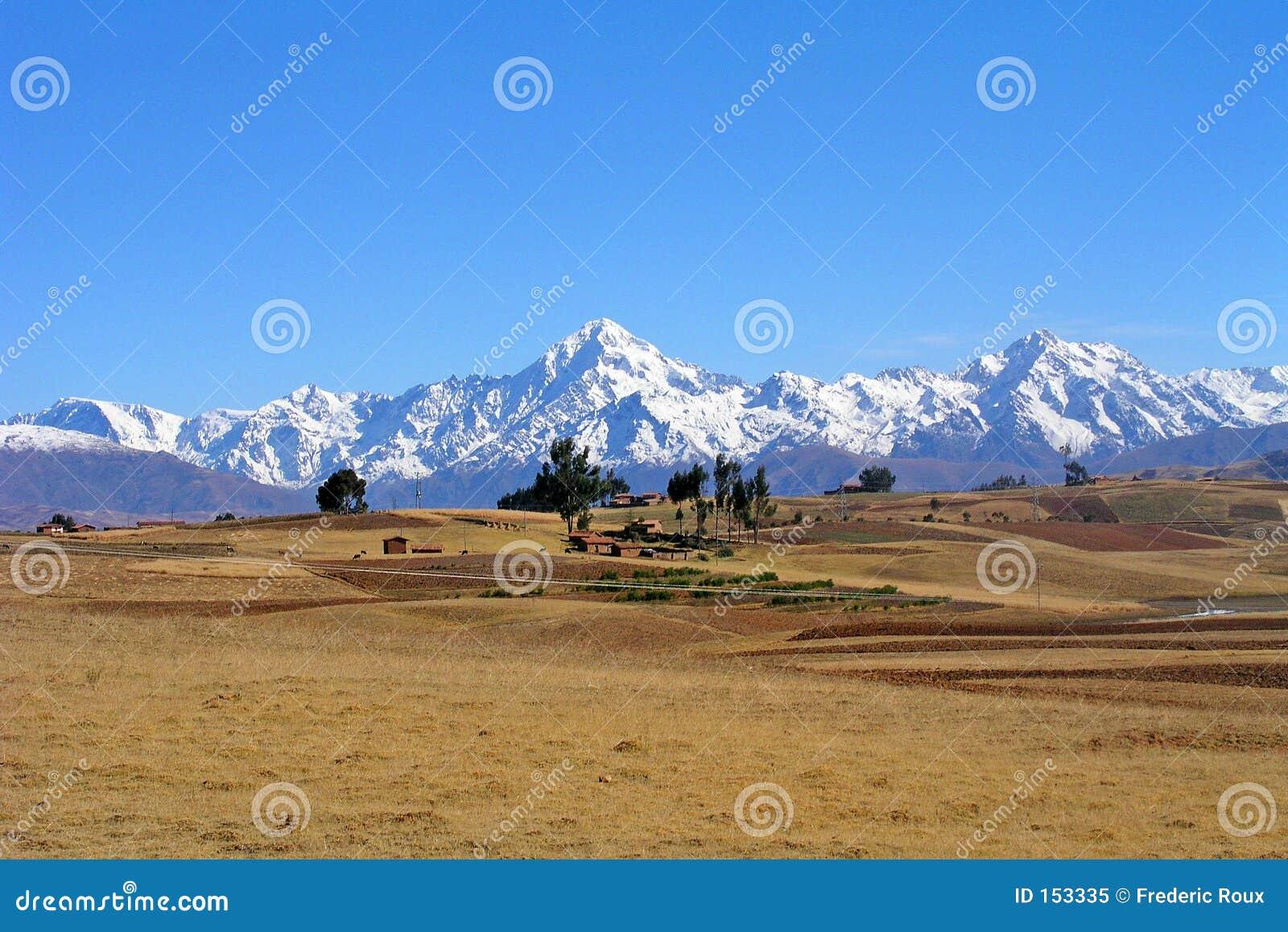 Field of the Altiplano, Bolivia