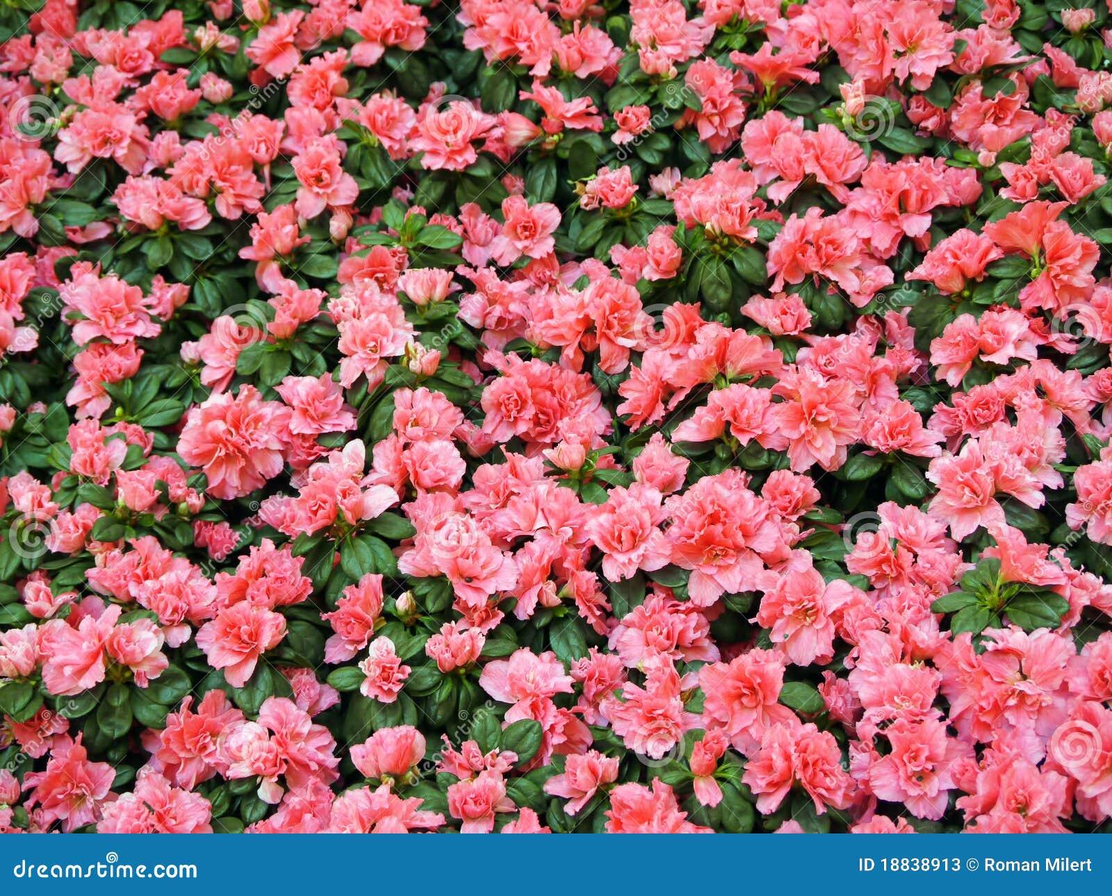 ... nature gardening flower plant spring plants japanese bloom garden grow