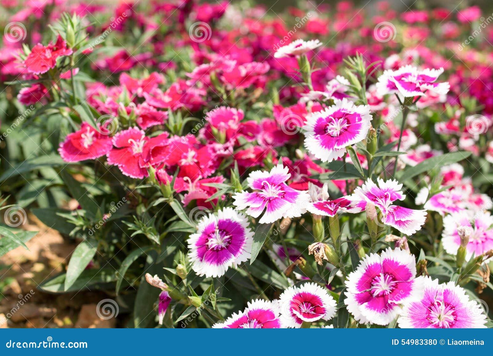 Field blomman
