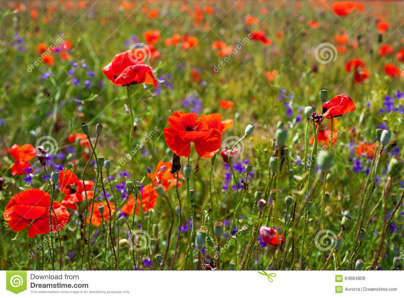 bright red flowers field - photo #6