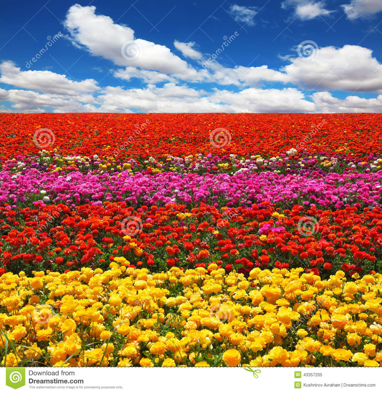bright red flowers field - photo #25