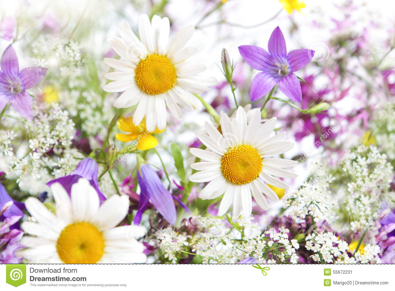 Colorful Daisies In A Field | www.imgkid.com - The Image ...