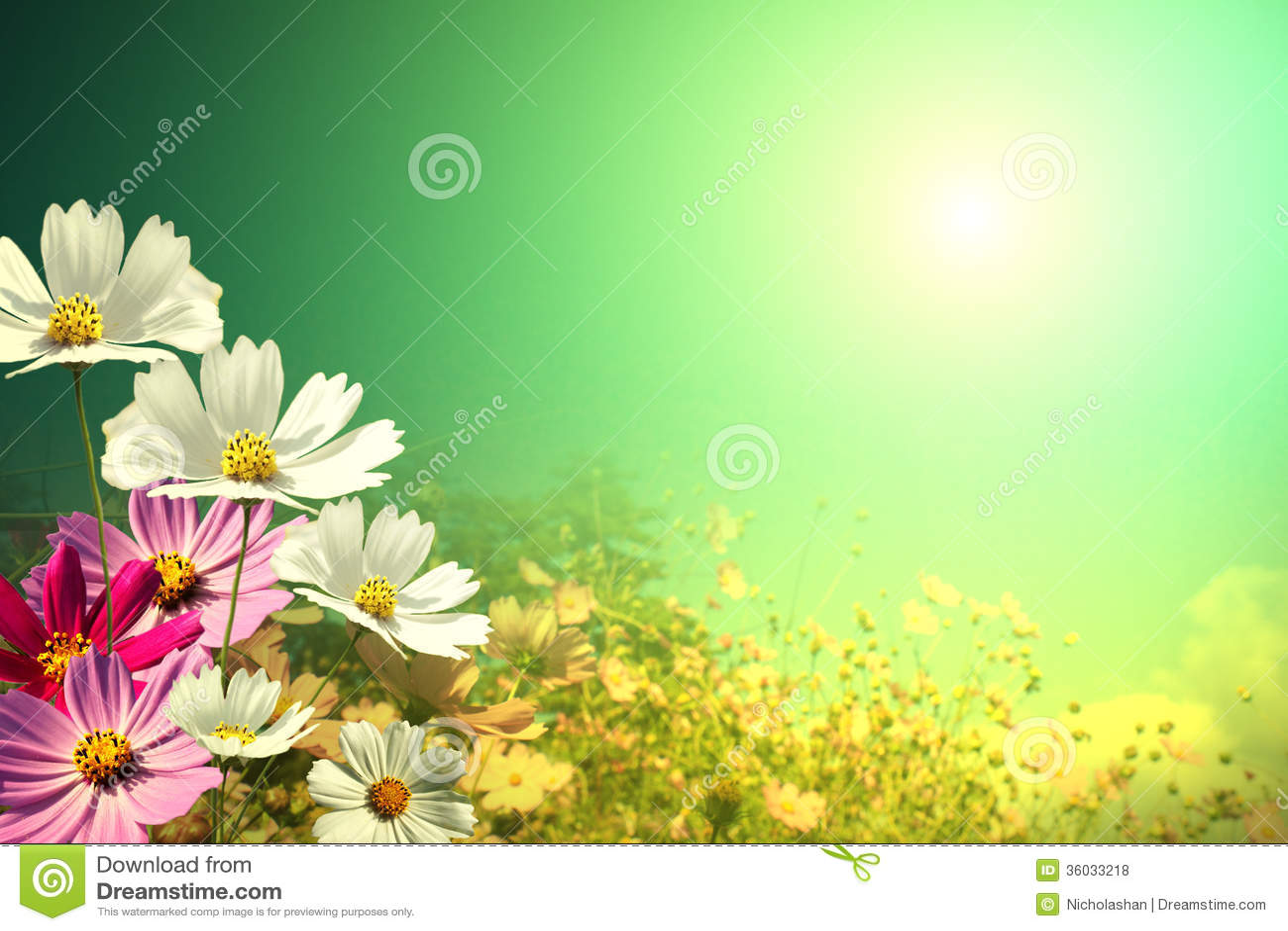 Field of daisy flowers stock photo image of chamomile 36033218 field of daisy flowers for adv or others purpose use izmirmasajfo