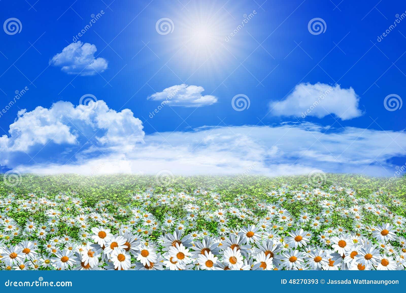 daisy field mountain sky - photo #12