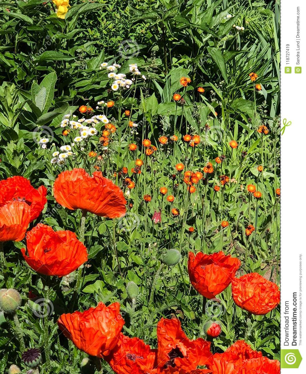 Field of different types of orange flowers stock image image of download field of different types of orange flowers stock image image of garden carpet izmirmasajfo