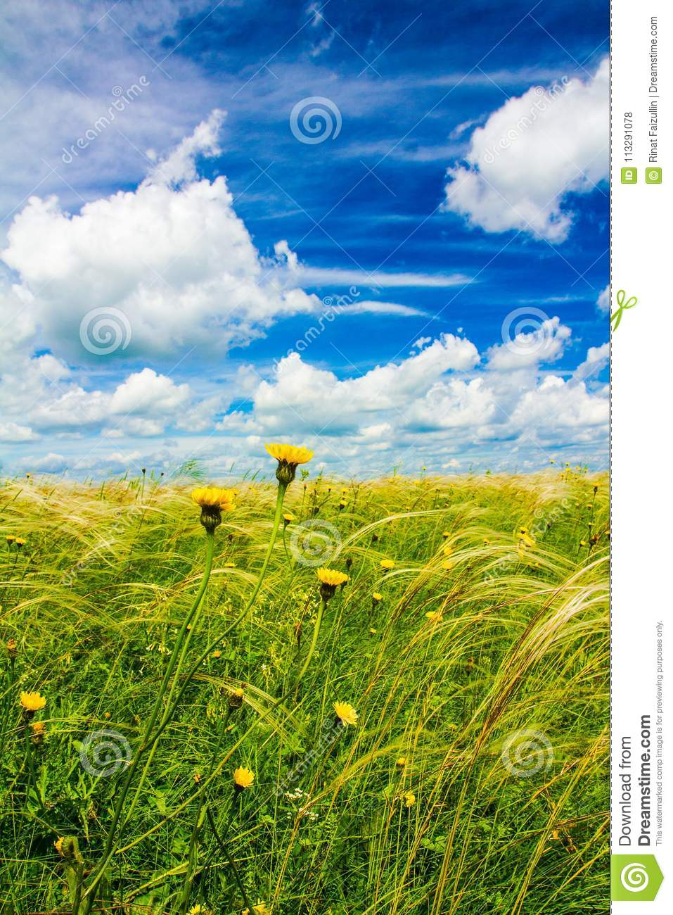 Field With Feather Grass And Yellow Flowers Stock Photo Image Of