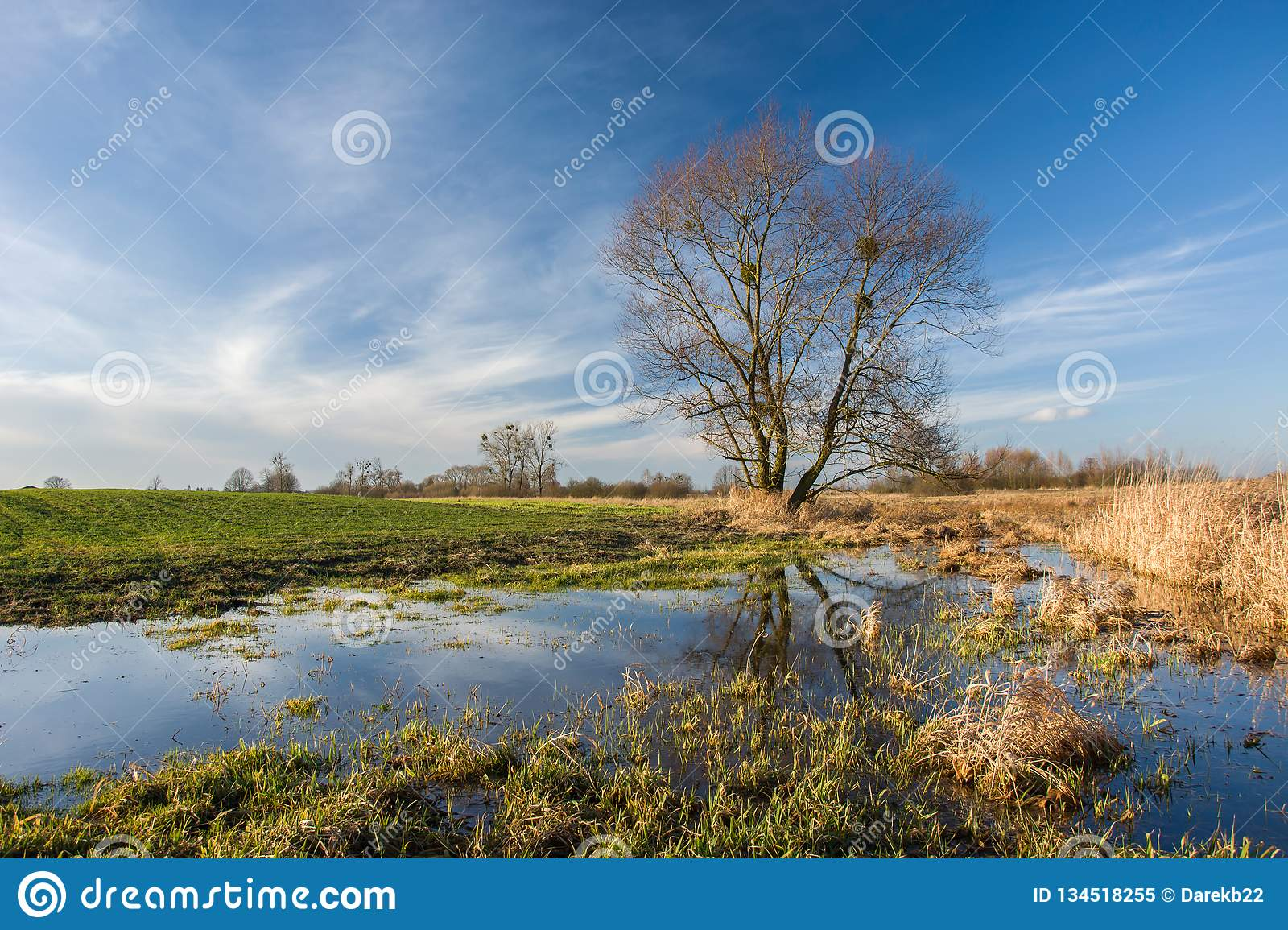 Field flooded with water and large tree