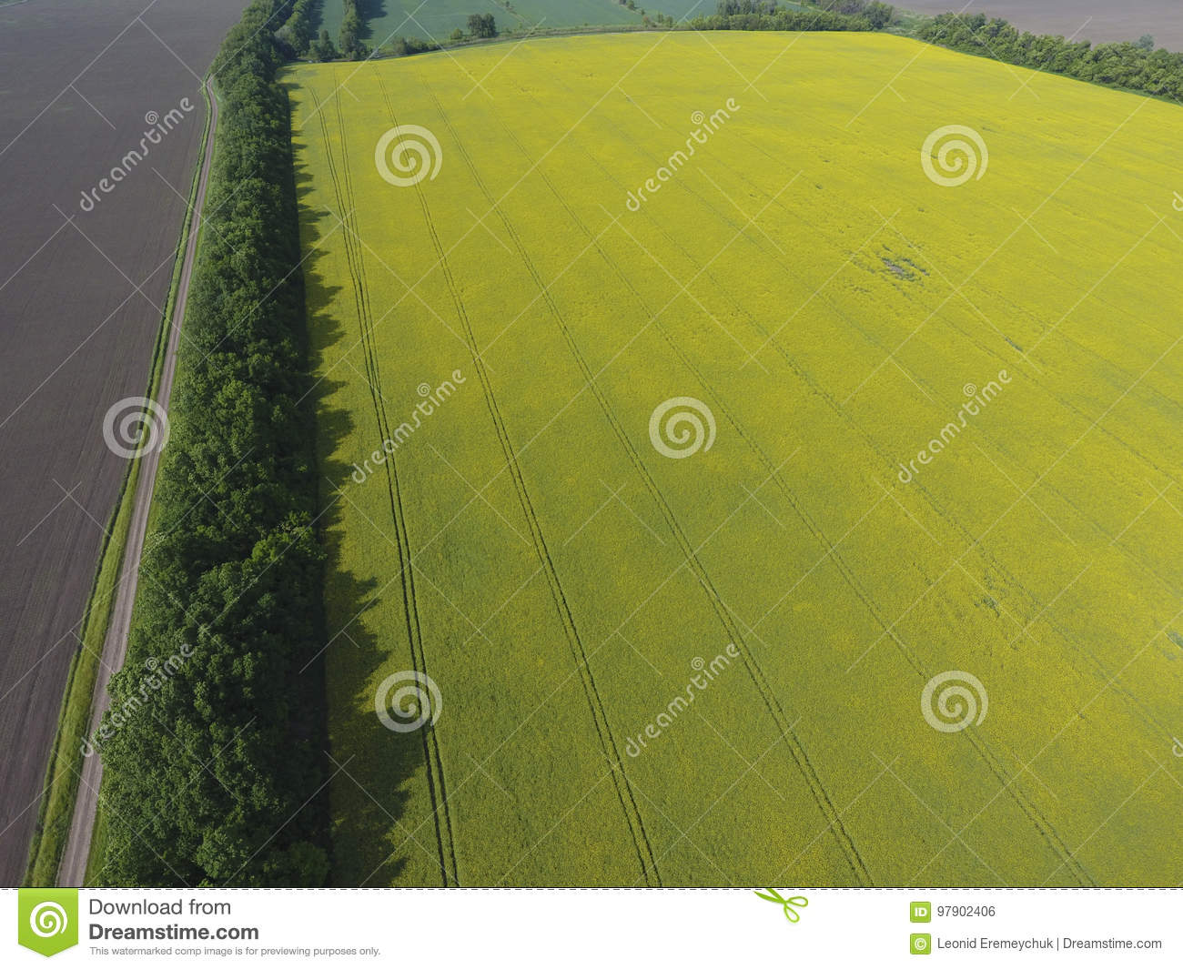 Field of flowering and forest belts for wind protection rape a field of flowering and forest belts for wind protection rape a syderatic plant with mightylinksfo