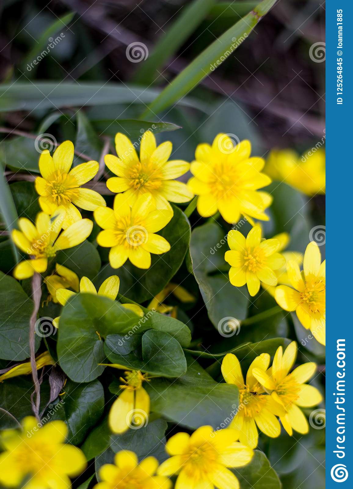 Field Flowers Yellow Flowers Swamp Stock Image Image Of