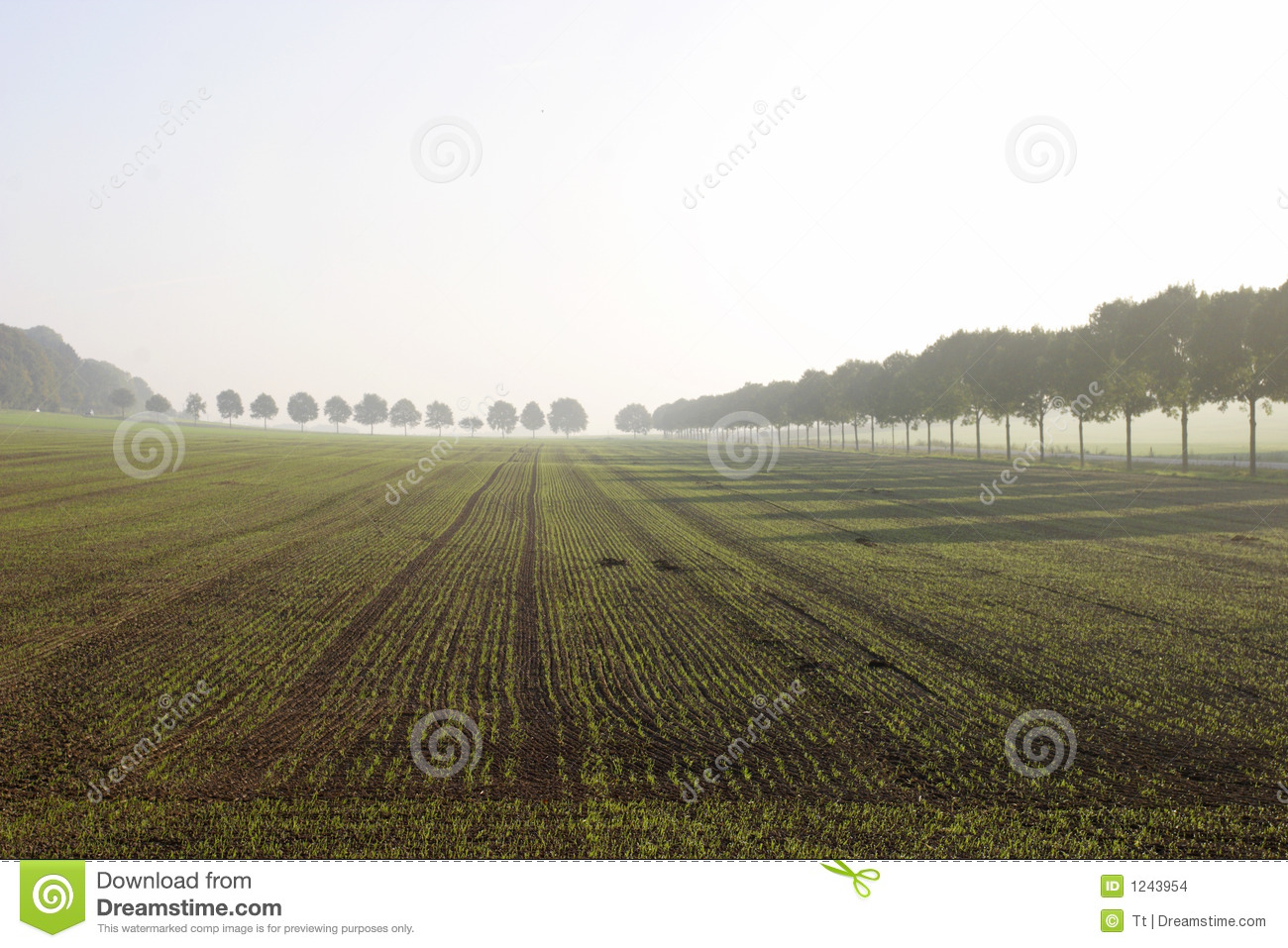 Field in fog.
