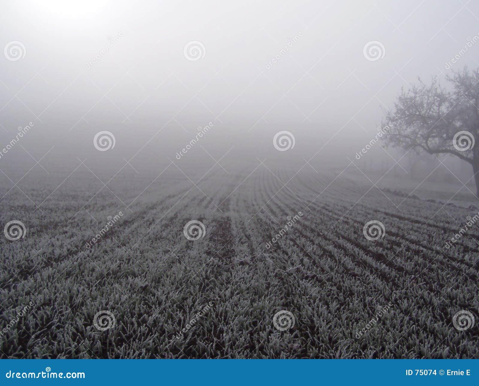 Field in the fog.