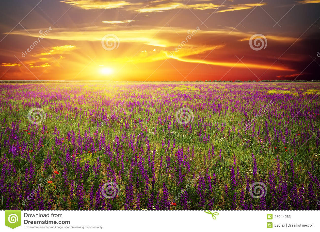 Download Field With Grass, Violet Flowers And Red Poppies Stock Image - Image of blue, beam: 43044263