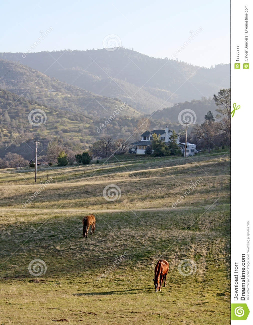 A Field of Grazing Horses In The Sun