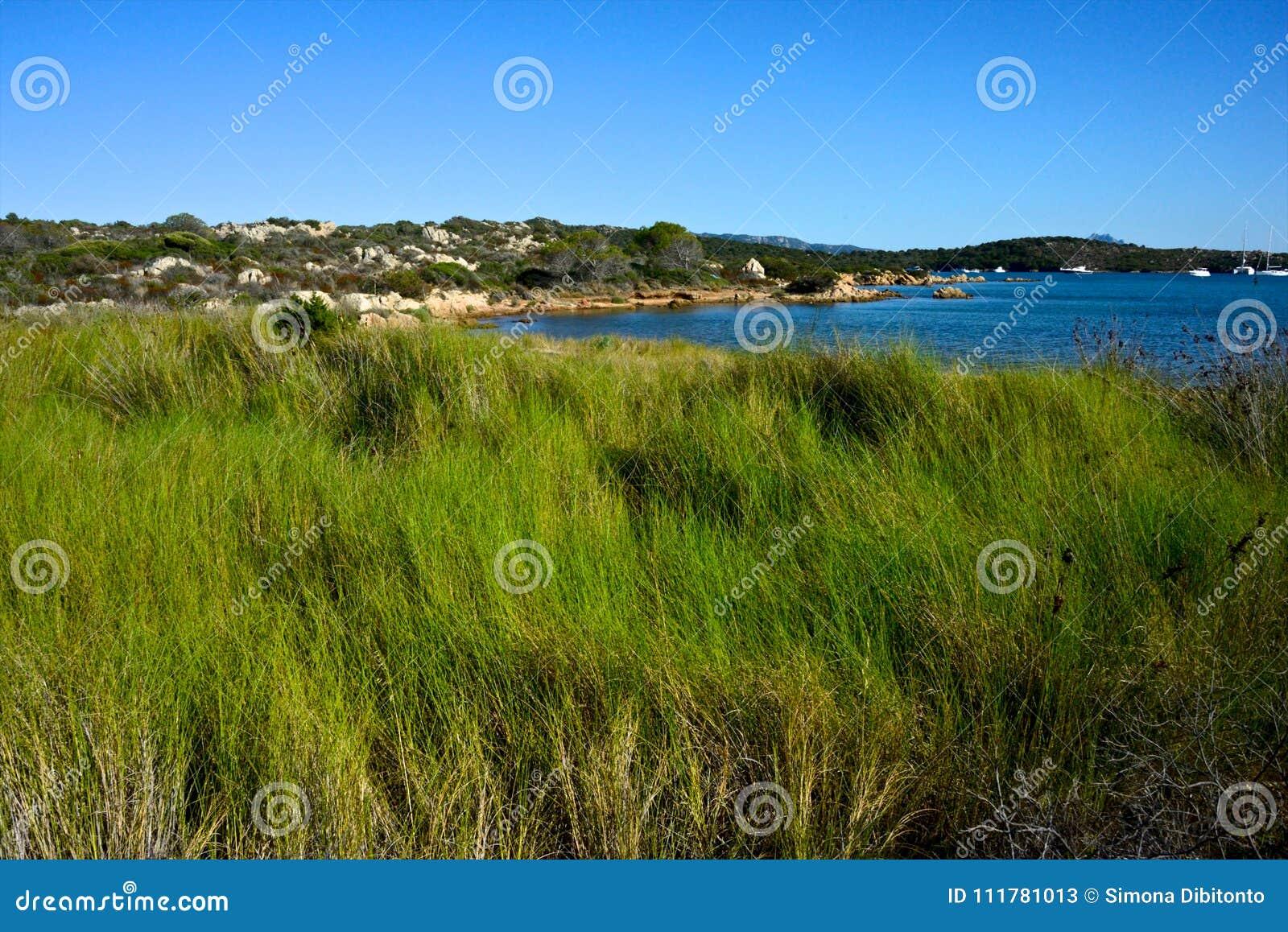 Field of green delicate grass in the wild nature near the sea