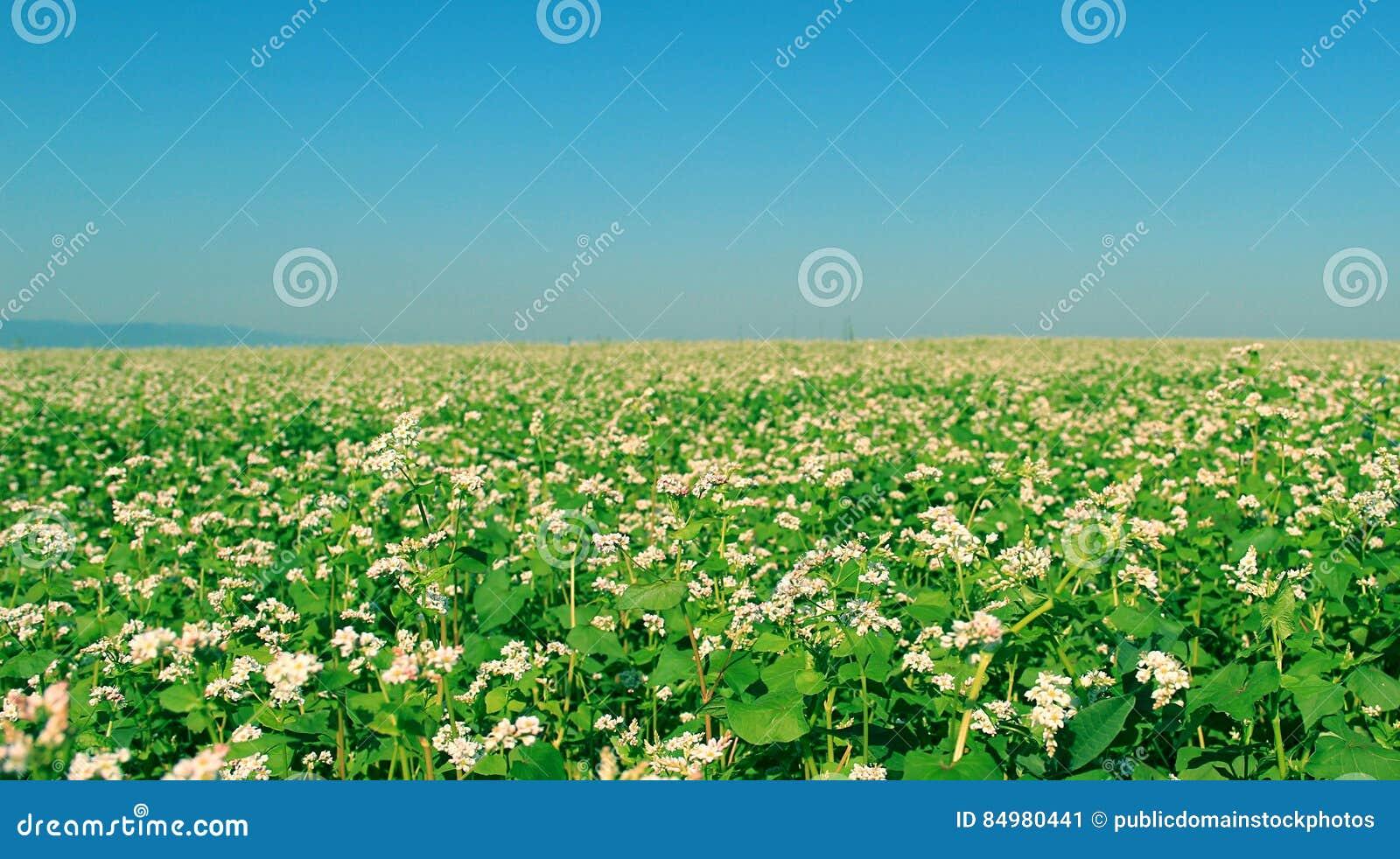 Download Field Of Green Flowering Plants Stock Image - Image of plants, horizon: 84980441