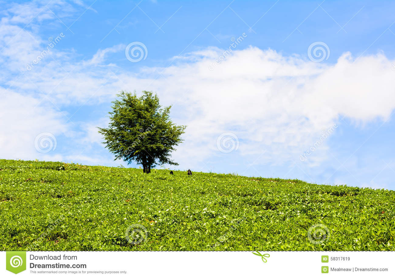 Field Of Green Grass And Trees At Blue Sky Stock Photo ...