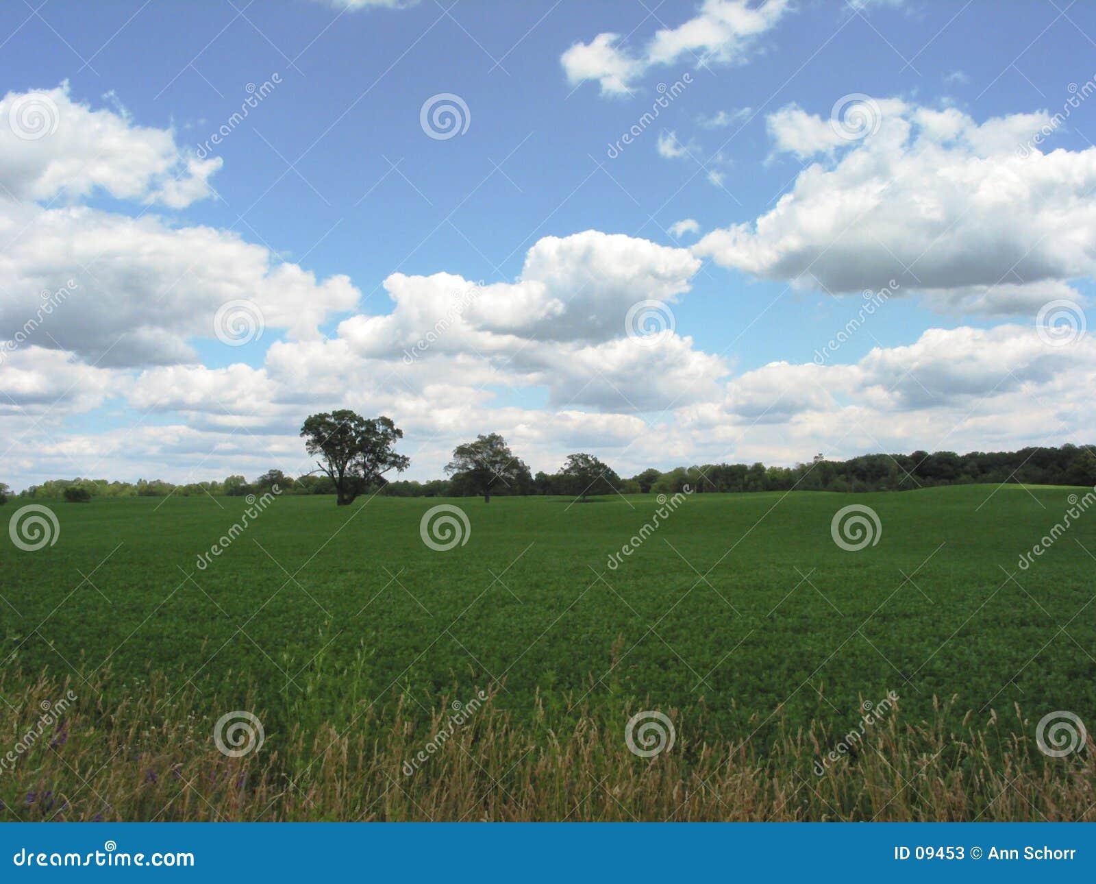 Field in Michigan – 1