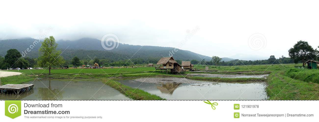 Field, paddy field, The countryside of rural Thailand