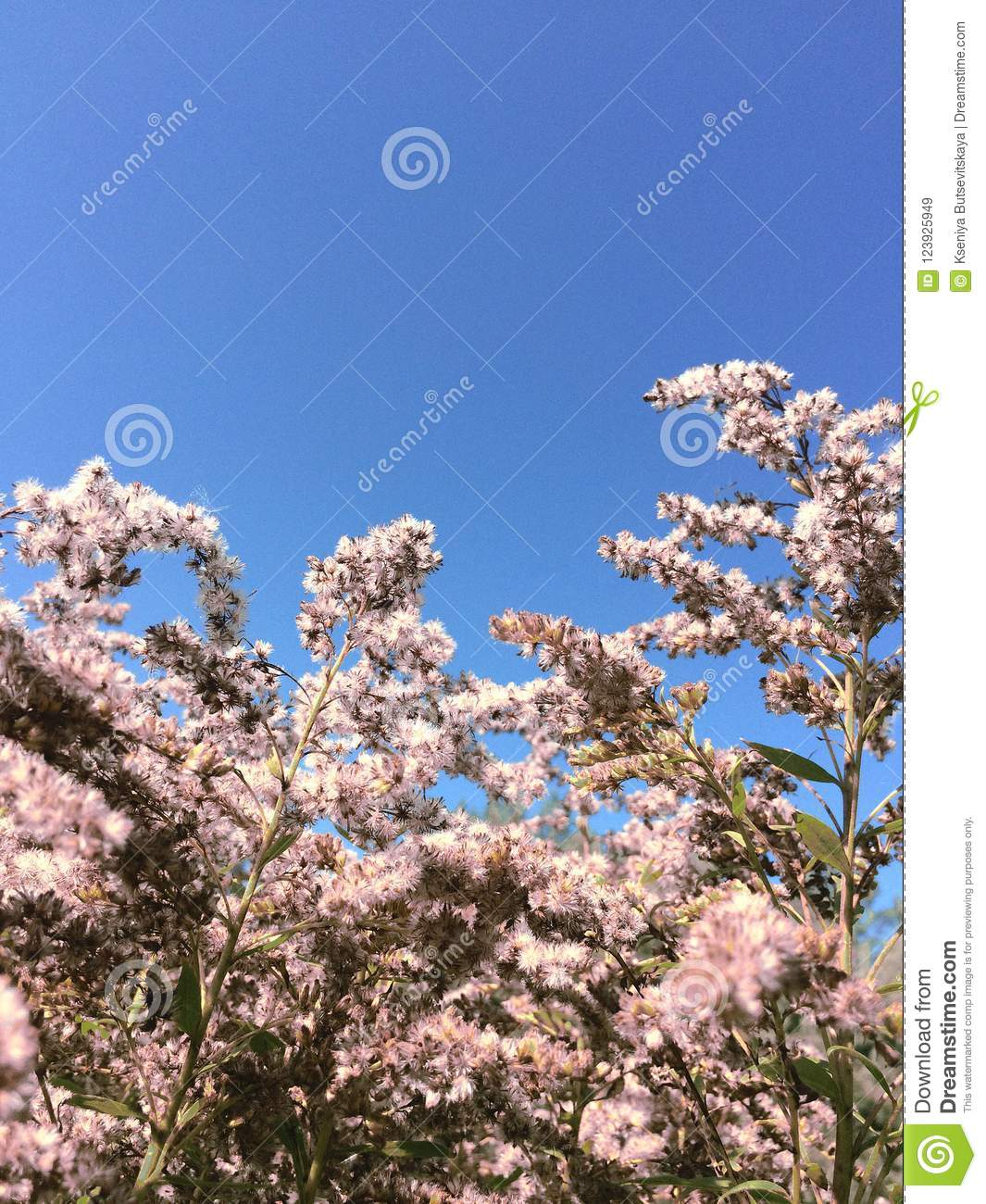 Field pink flowers, blue sky