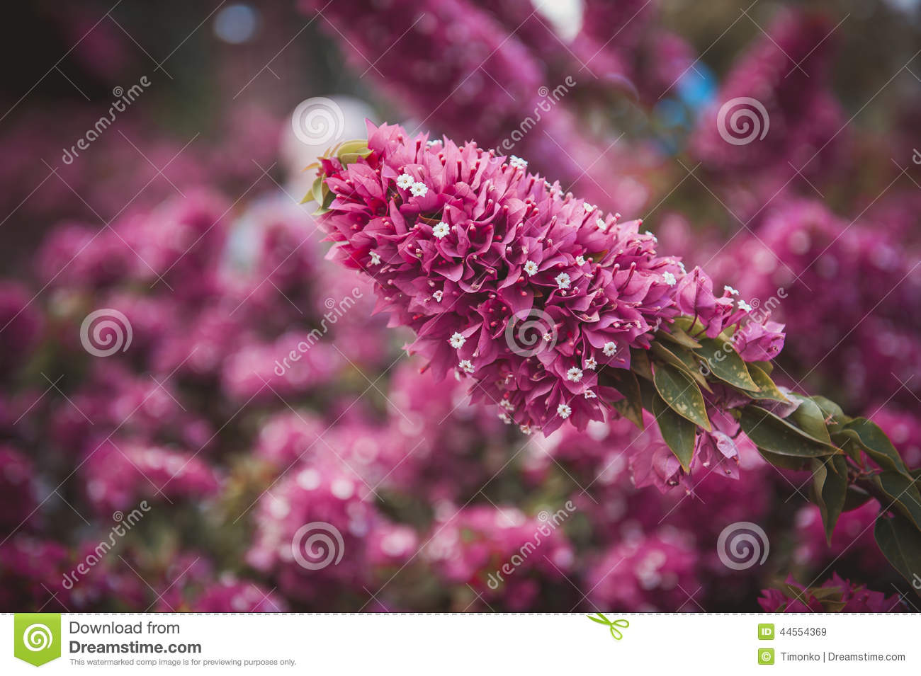 Field Of Pink Flowers Summer Fall Background Nature Landscape