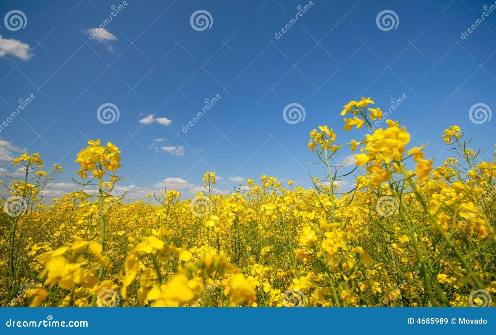Trupa Trupa - Sunny Day