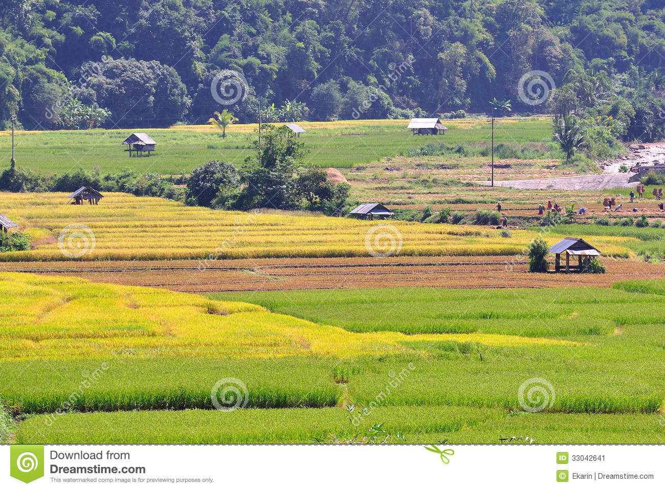 Field Rice And Hut Good Landscape In Thailand Stock