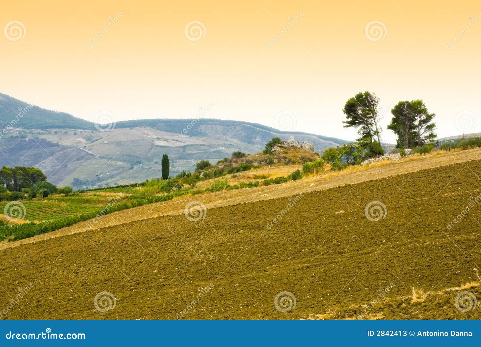 Field in sicily