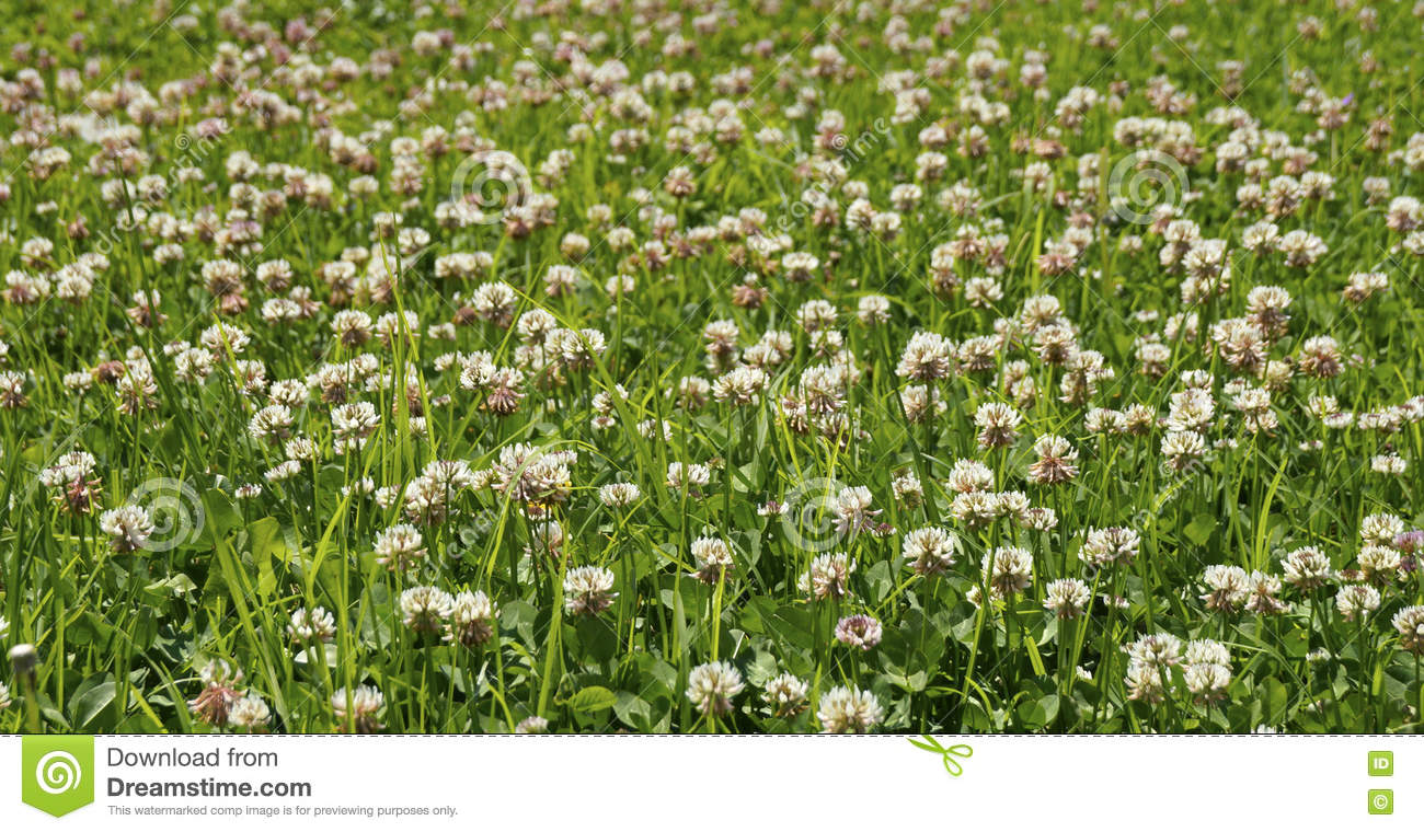 Field of small wild flowers stock photo image 77099159 background bunch colored cream field flowers grass growing little small texture tiny white wild dhlflorist Image collections