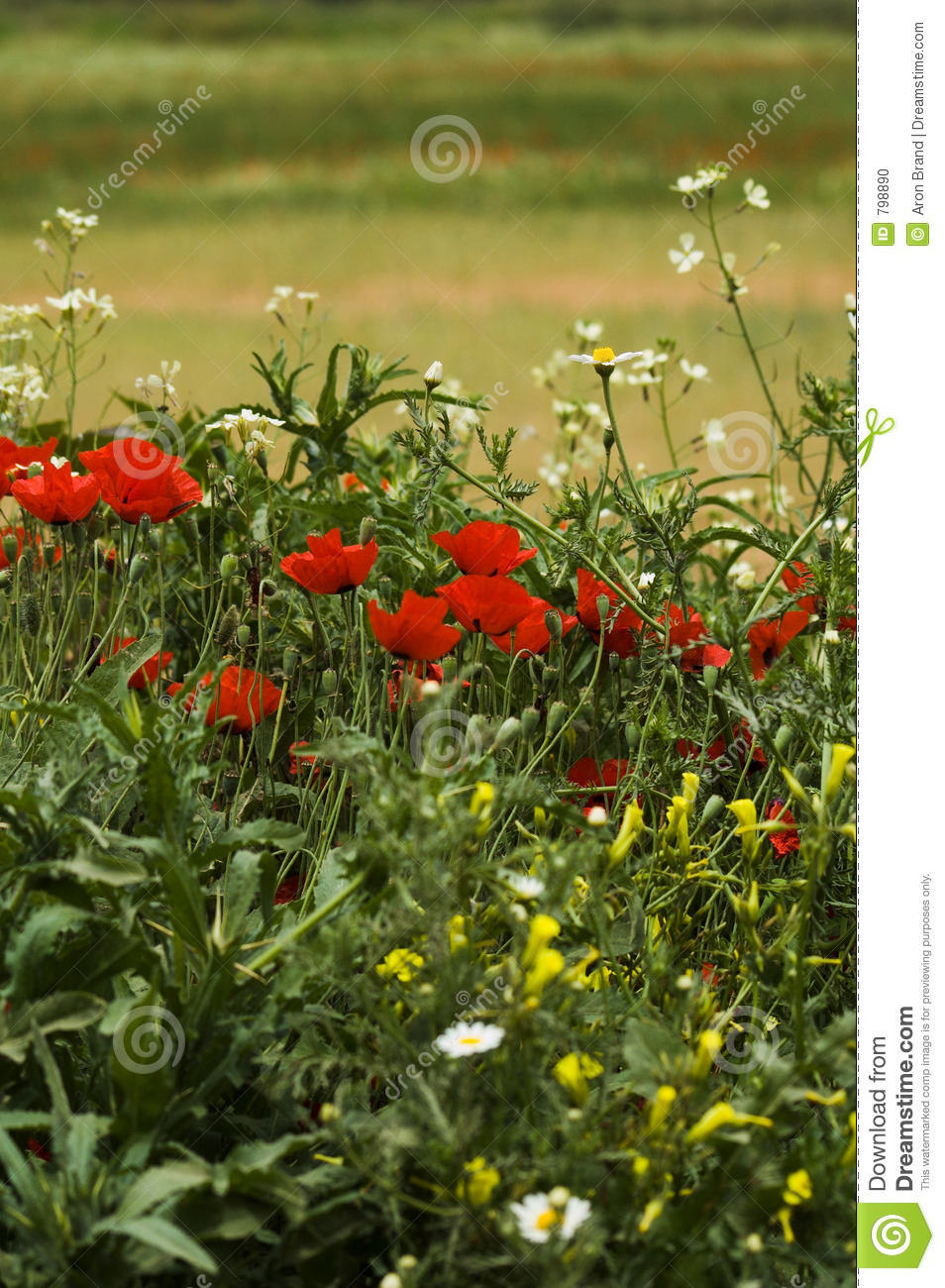 A field of spring flowers (shallow depth of field)