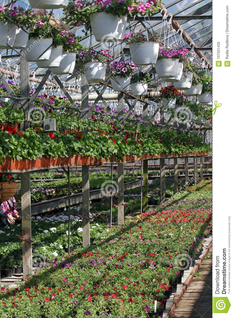 Field With Spring And Summer Flowers In Greenhouse At Sunlight