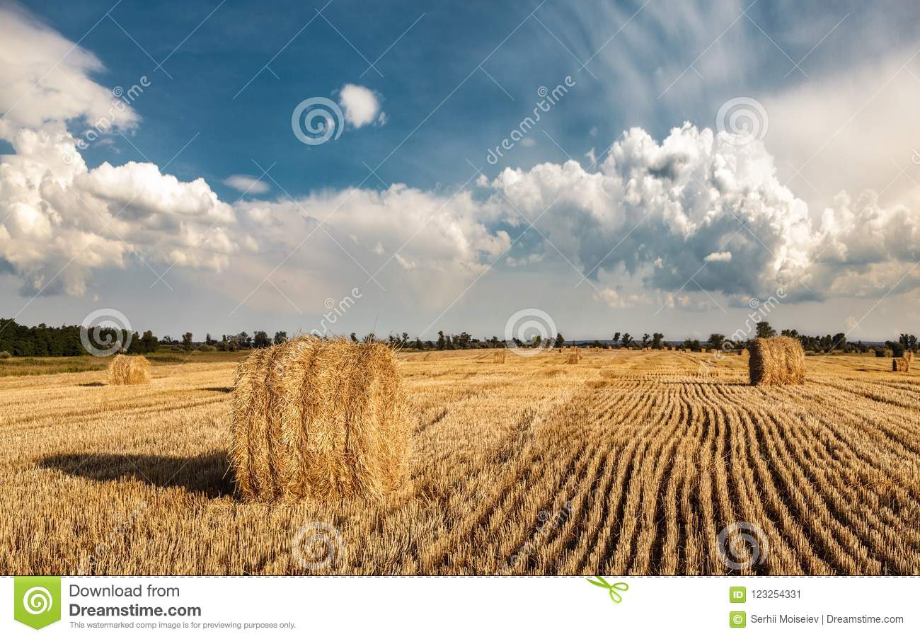 A field of straw bales