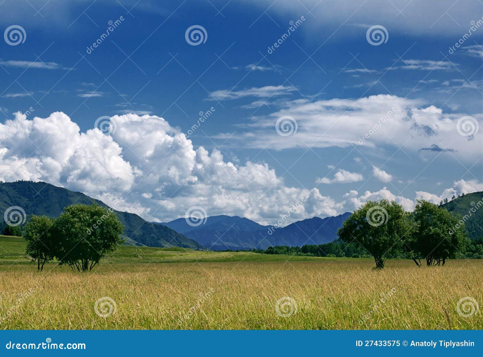 Field of summer grass