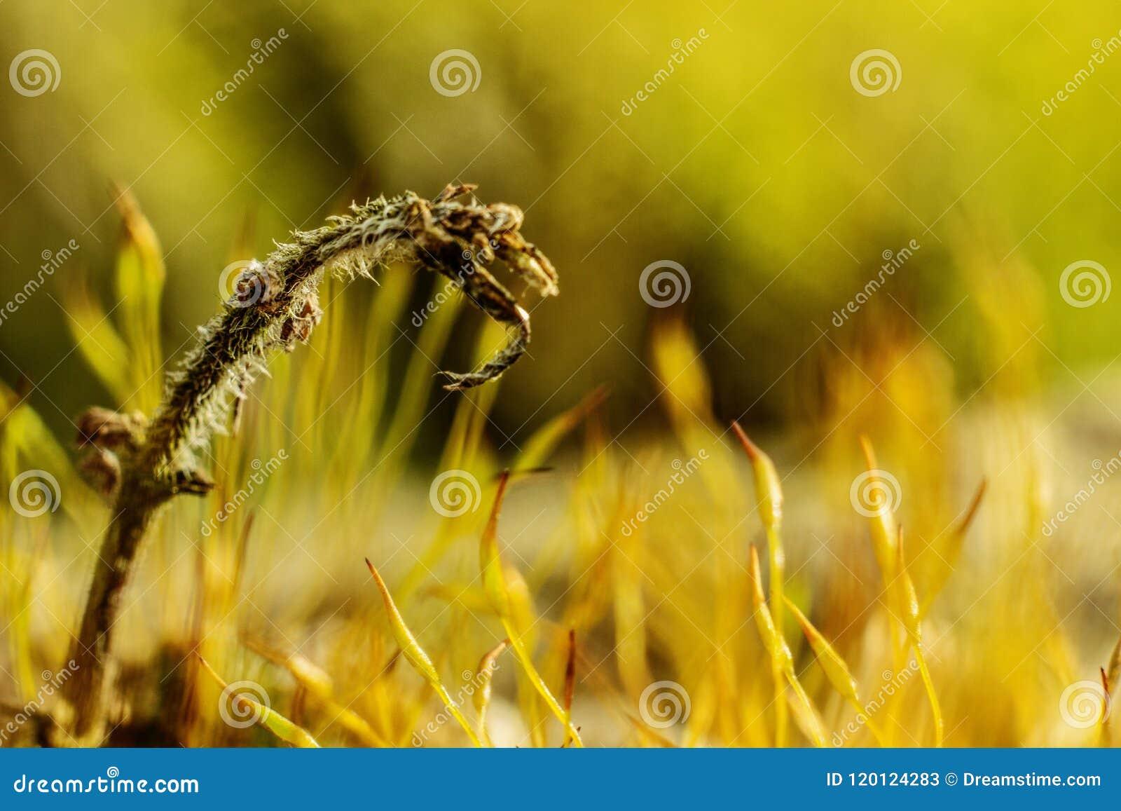 Field summer grass