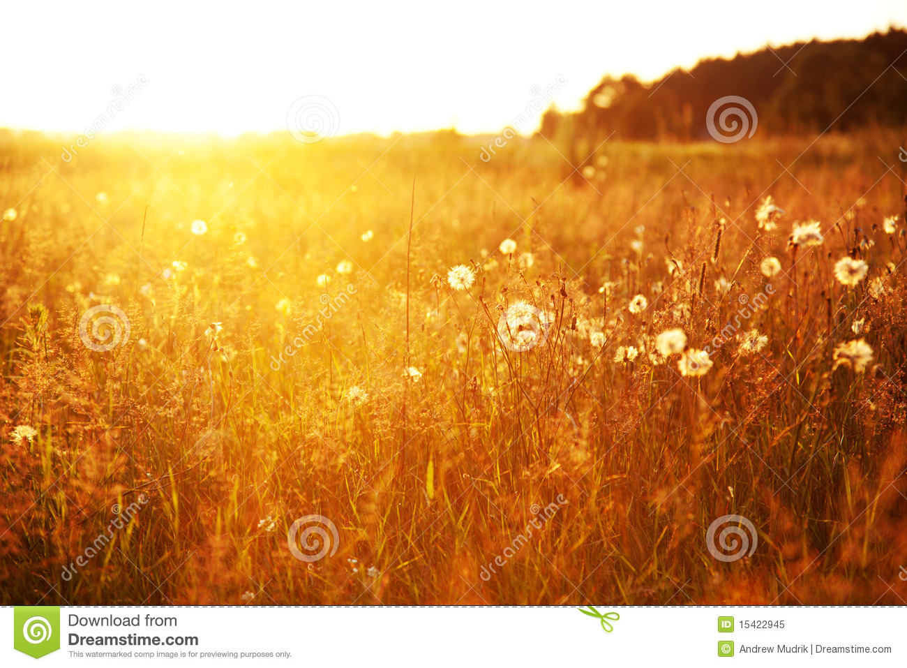 Tall Grass Field Sunset For Field At Sunset Stock Image Image Of Agriculture Light 15422945