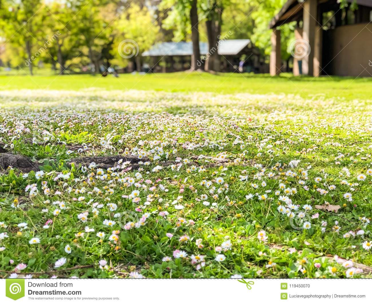 Field of tiny white flowers stock photo image of park building download field of tiny white flowers stock photo image of park building 119450070 mightylinksfo