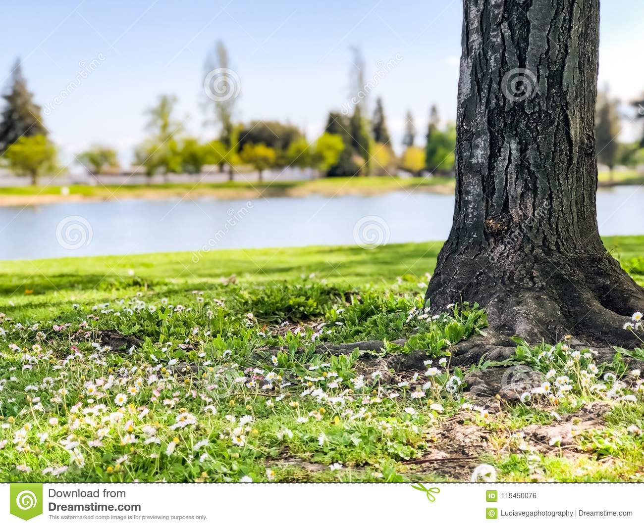 Field of tiny white flowers with tree stock photo image of download field of tiny white flowers with tree stock photo image of california home mightylinksfo