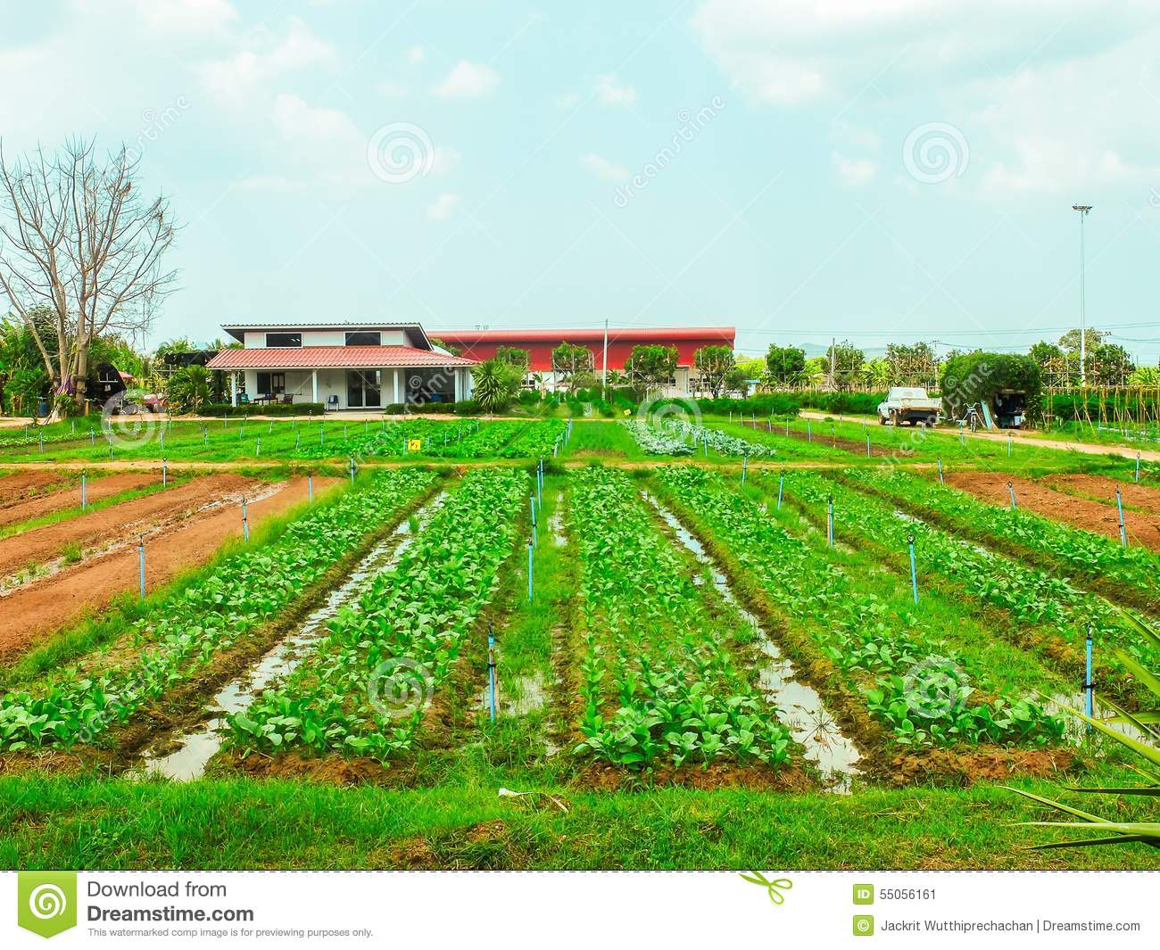 Field Of Vegetables And Small Ditch Stock Photo - Image ...