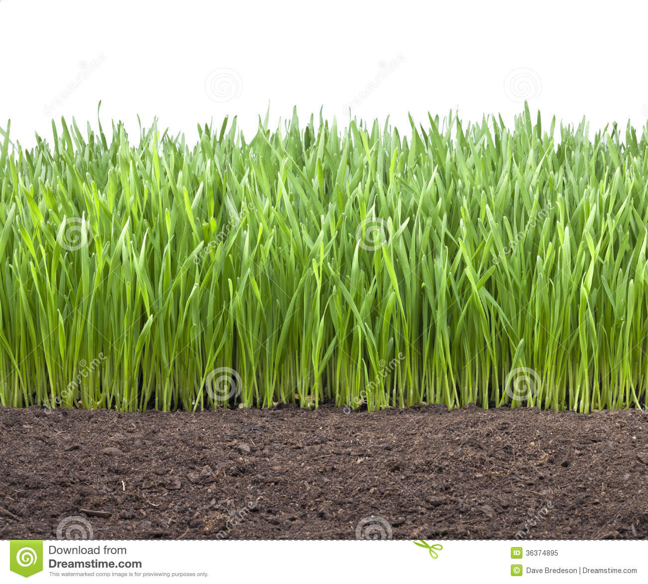 Field wheat grass soil royalty free stock photo image for Soil and green
